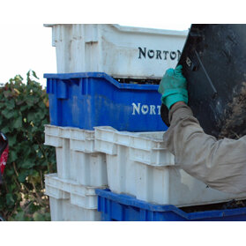 Bodega_grape-bins-524x224